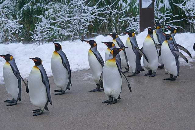 Do the Penguin Walk!