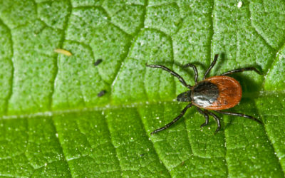 Tick Prevention Tips